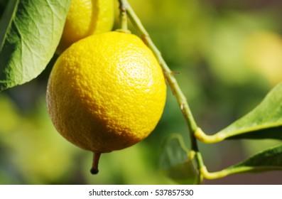 closeup of yellow lemon
