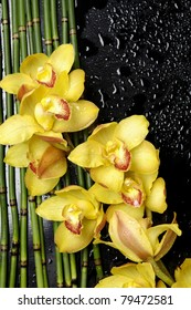 Closeup -yellow orchid with bamboo grove on wet black background