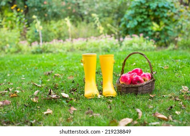 Closeup of yellow rubber boots and basket with red apples in the garden