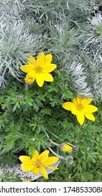 closeup of yellow summer flowers