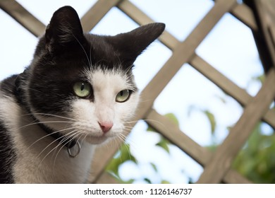 Closeup of a young, black and white cat's face - watching something