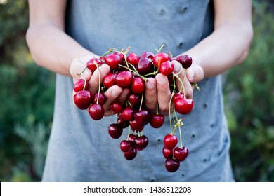 closeup of a young caucasian man outdoors with a handful of ripe cherries in his hands, freshly collected on an organic orchard