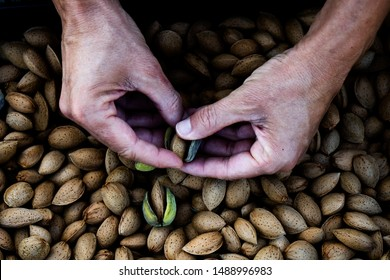 closeup of a young caucasian man removing the outer hull of a pile of almonds freshly collected during the harvesting in an almond orchard in Catalonia, Spain