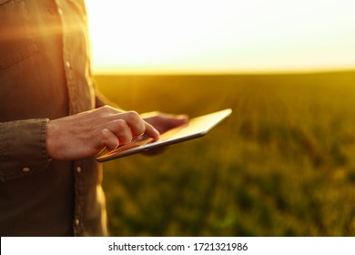 Closeup of young farmer's hands holding a tablet and checking the progress of the harvest at the green wheat field on the sunset. Worker tracks the growth prospects. Agricultural concept.