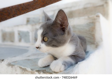 closeup of young gray cat on white stairs