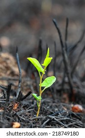 The close-up of young green sprout after fire.