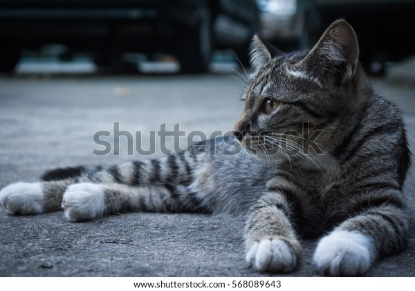 Close-up.A street cat rest on the ground.