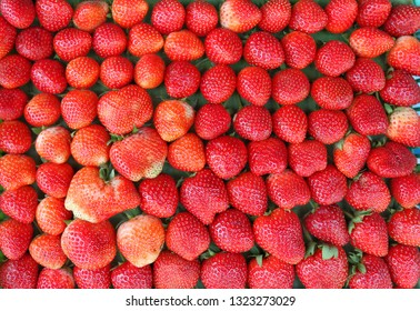 Closeups fresh red strawberry ready for sell and eat in harvest season.