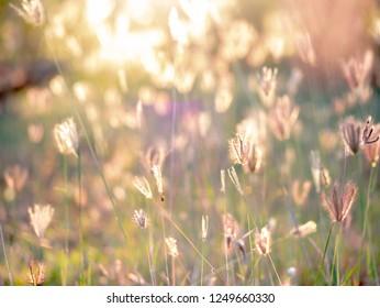 closs up  soft focus style of a grass flower field