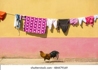 Clothes drying on string with chicken walking with colored wall in the background. Guatape, Colombia