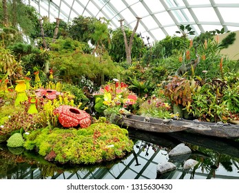 Cloud Forest, Gardens by the Bay, Singapore - Jan 24th, 2019 - a coolest attraction with its spiralling walkways and the world's tallest indoor waterfall that surrounded by diverse vegetation and flor
