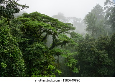 Cloud forest landscape of Monteverde Costa Rica with fog