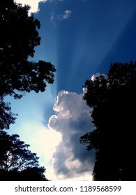 cloud with sunlight over tree