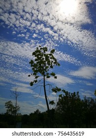 cloud, tree and sky