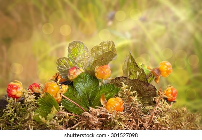 cloudberries on the simple wooden table