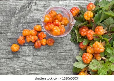 Cloudberry among the leaves on a gray wooden background