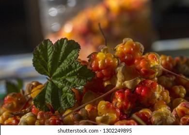 cloudberry wild berries