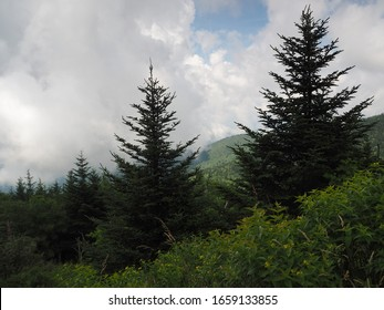 Clouded Mountainside and Evergreen Tree Scape