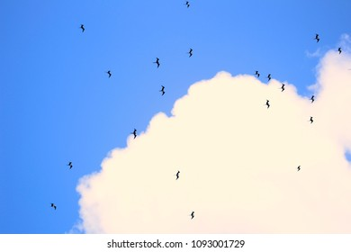 Clouds and birds in the sky