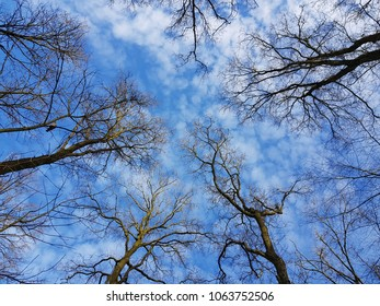 Clouds and blue sky in the Amsterdam forest on a winter day.  Amsterdam, the Netherlands 02102018