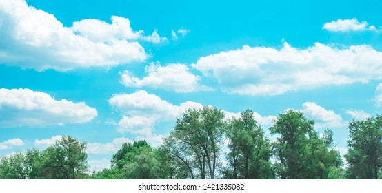 Clouds in the blue sky over the treetops