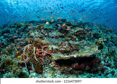 Clouds of colorful reef fish swarm above a vibrant coral reef slope in Alor, Indonesia. This remote, tropical region is home to a spectacular array of marine biodiversity.