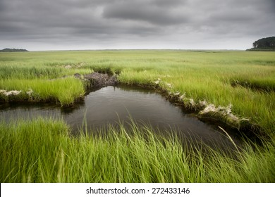 Clouds drift over a salt marsh on Cape Cod, Massachusetts. Marshes all over the world are vital habitats for many species of fish, invertebrates, and migrating birds.
