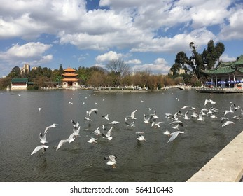 The clouds and flying free seagulls. Beautiful view from Daguan Park Lake, Kunming China. Beautiful day in China