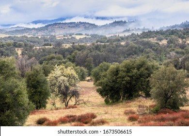 Clouds and mist over rolling hills in spring time with pear tree in bloom, coastal live oaks and buckwheat in Julian California landscape