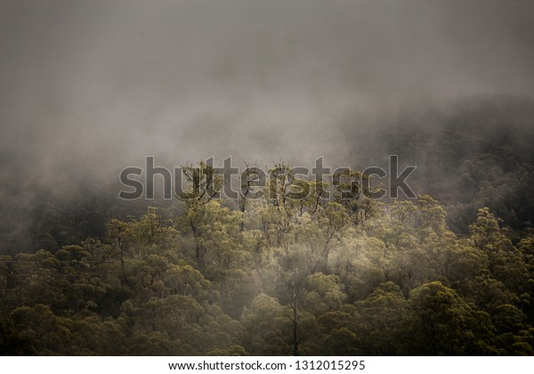Clouds moving through trees in the Franklin-Gordon Wild Rivers National Park, Tasmania.