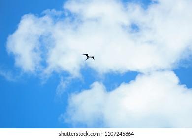 Clouds in my sky