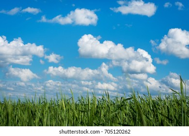 clouds on blue sky over a field of green grass