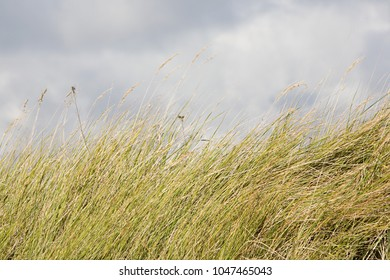 Clouds over marram grass