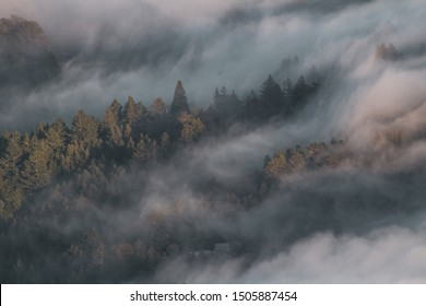 Clouds over trees on Mt. Tam in Marin County, Ca