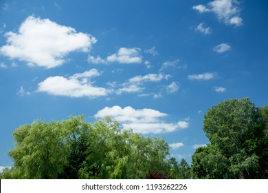 clouds over treetops