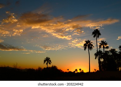 Clouds and palm on horizon at sunset