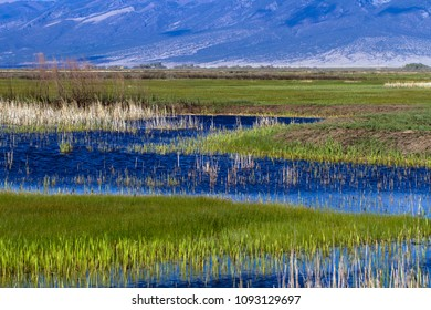 Clouds reflected in marsh water in Alamosa National Wildlife Refuge with Blanca Mountain in the background