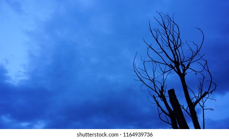 clouds sky on background and front view dead tree with no leaves, with copy space for your text.