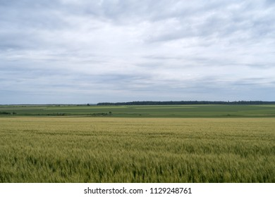 Clouds in sky over green wheat field a month before harvest