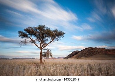 Clouds streak over the Namib Rand Conservancy, as a tall tree protrudes from the tall, golden grass.