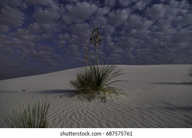 Clouds with Yucca at White Sands National Monument.