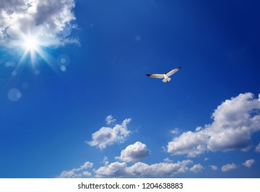 Cloudscape image with flying seagull over blue sky with clouds and shining sun
