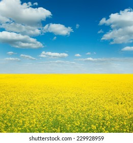 Cloudy blue sky over yellow spring field