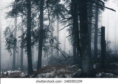 Cloudy dark fog, forest, high up in the Harz national Park, Germany