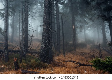 Cloudy dark fog, forest, high up in the Harz national Park