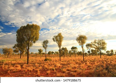 Cloudy day in the Australian bush