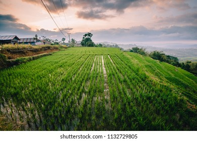 Cloudy day at the rice terrace overlooking Ruteng town in Flores Indonesia