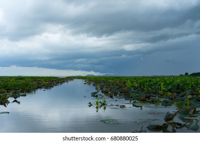 Cloudy overcast, rain was falling in large swamp.
