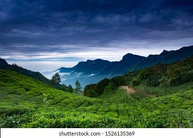 cloudy sky, landscape of tea plantation from Munnar,Kerala