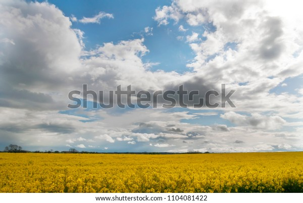 Cloudy sky and raps field